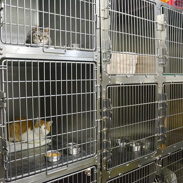 犬・猫の入院室